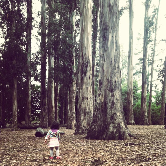 Harriet in the eucalyptus grove at UCB
